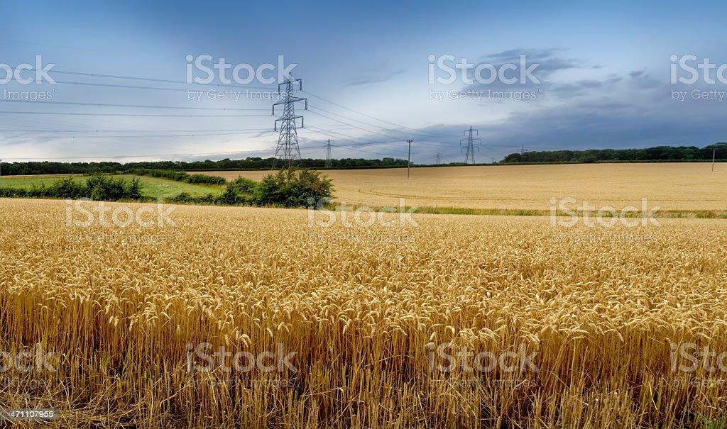 pylons wheatfield royalty-free stock photo