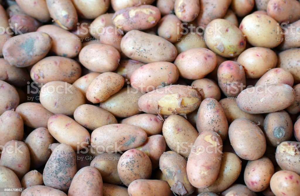 Pyramid heap of unwashed new potatoes isolated on white. stock photo