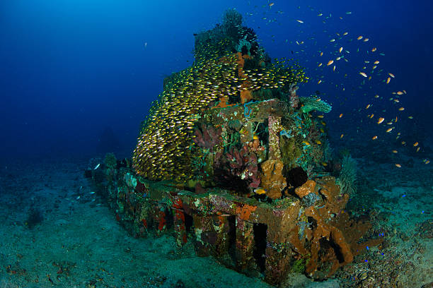 pyramid in jemeluk - artificial reef stock pictures, royalty-free photos & images