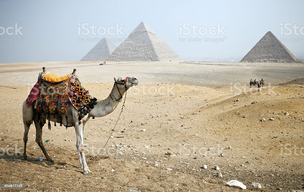 Pyramids and Camel stock photo