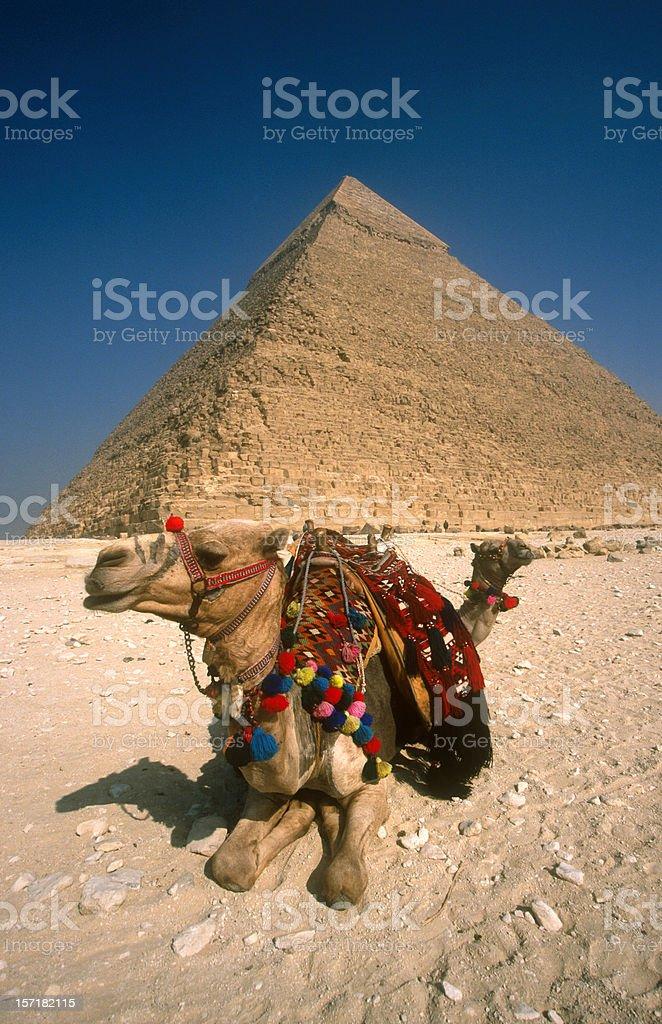 Pyramids Camels stock photo