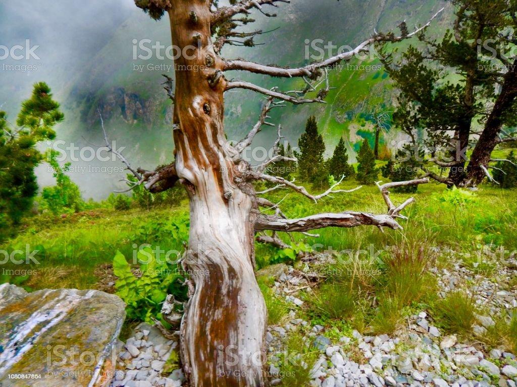 Pyrénées nature - Photo
