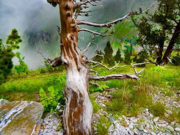 pyrénées nature - josianne toubeix photos et images de collection