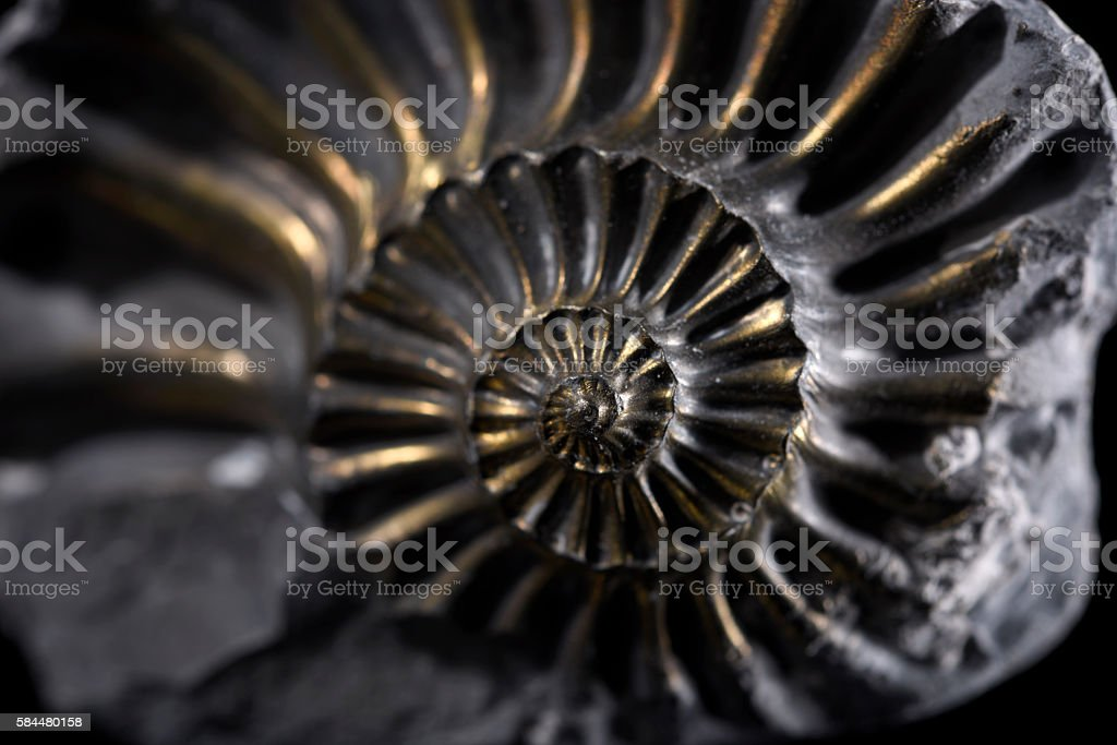 Pyritized Ammonite stock photo