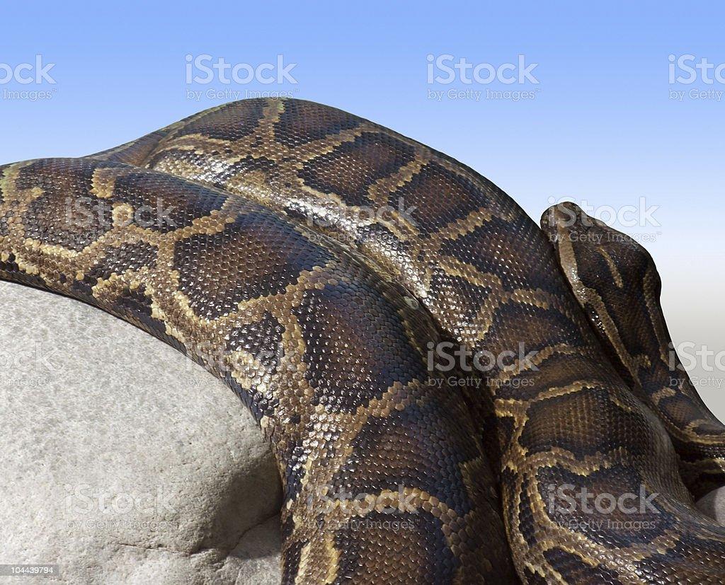 Python detail on a stone stock photo
