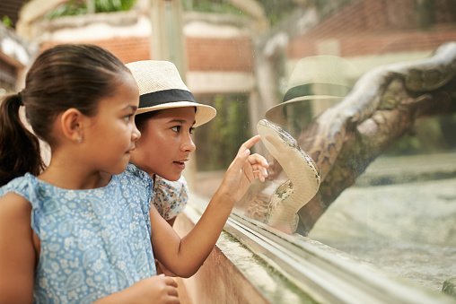 Indonesian girls pointing at python in terrarium
