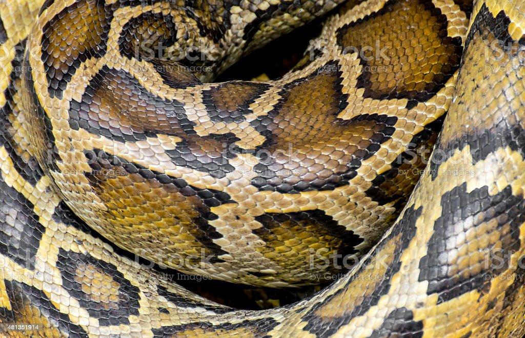 Python reticulatus skin stock photo