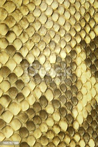 istock Python snake skin 168282166