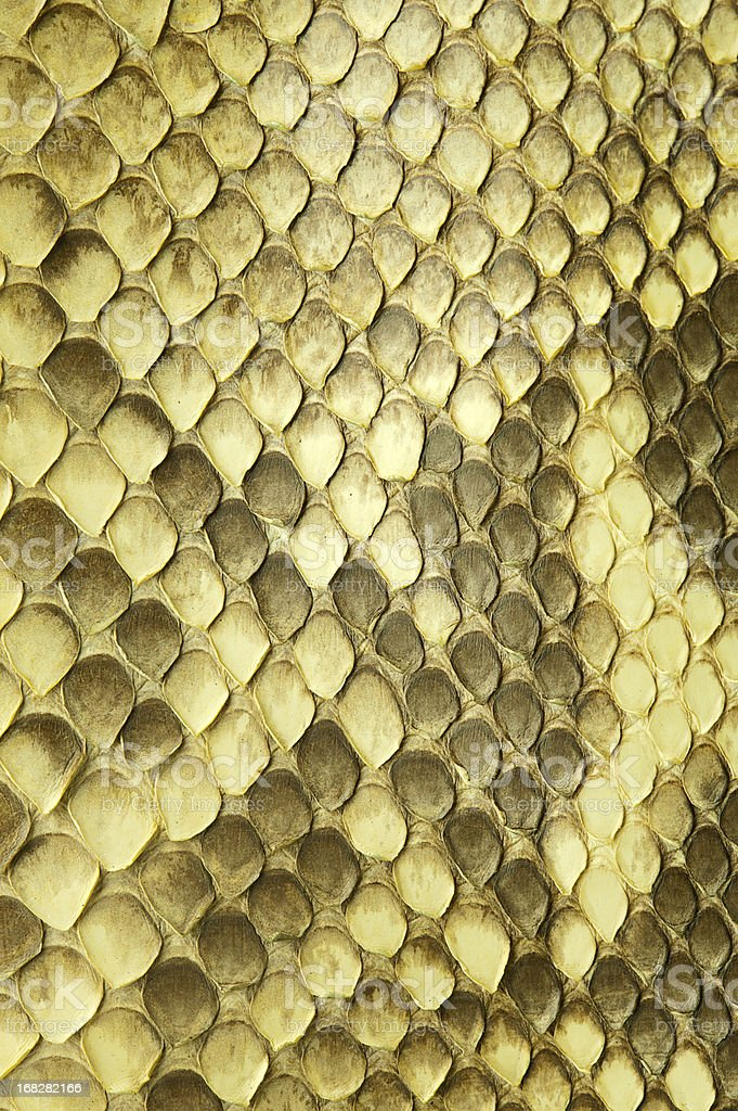 Python snake skin stock photo