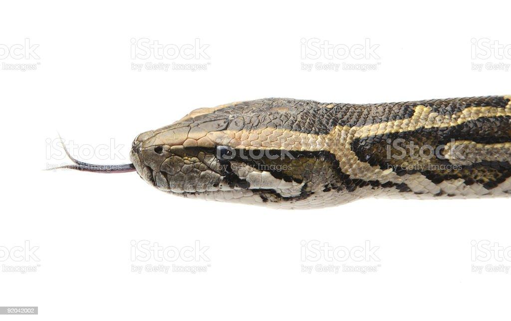 pythons head stock photo