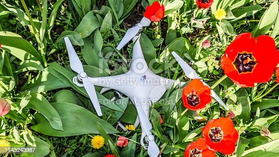 Krasnodar, Russia - April 14, 2017: Quadrocopter DJI Phantom 4 is located on a meadow with red tulip flowers.