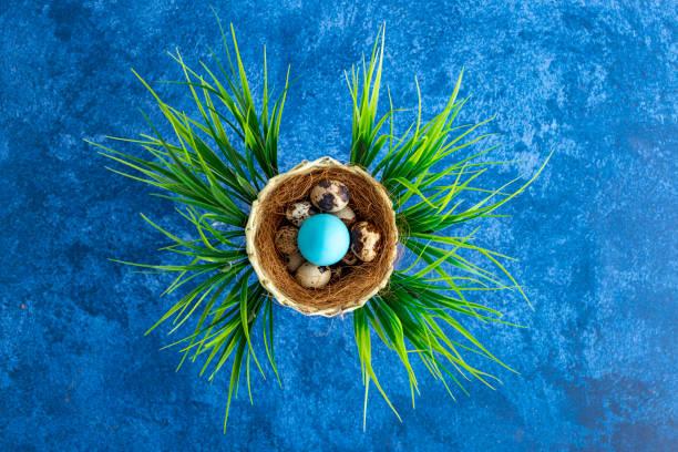 Quail easter eggs in nest dark blue background holiday decorations picture id1215092774?b=1&k=6&m=1215092774&s=612x612&w=0&h=i8uuphnjtuiwrgyohe9jiwzgqkewzmkpffklo0cguqk=