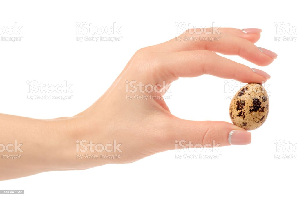Quail egg isolated in hand stock photo
