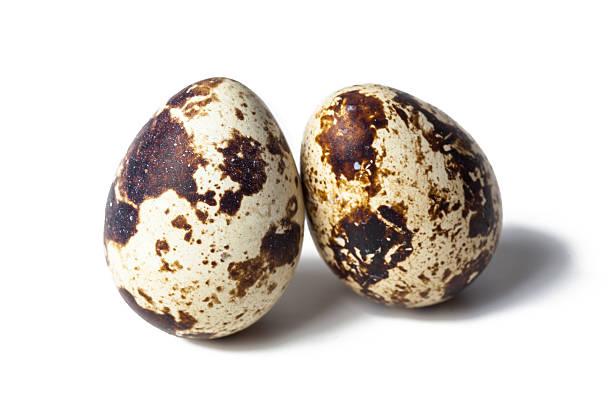 quail eggs are isoliert auf weißem hintergrund - wachtelei stock-fotos und bilder