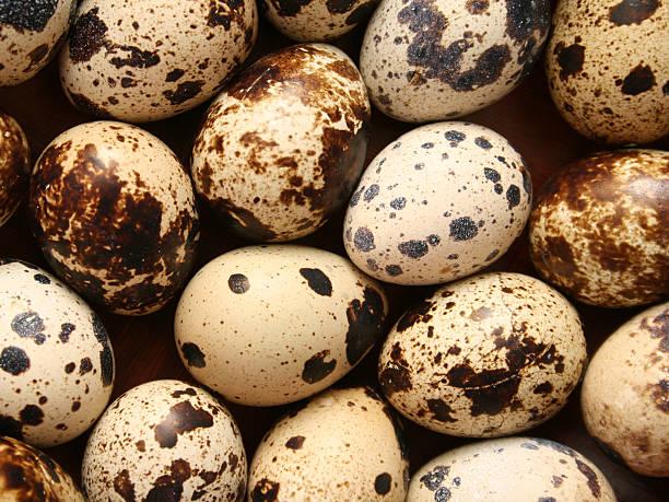 quail eggs hintergrund - wachtelei stock-fotos und bilder