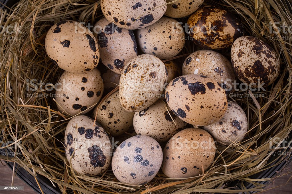 quail eggs in a nest close-up stock photo