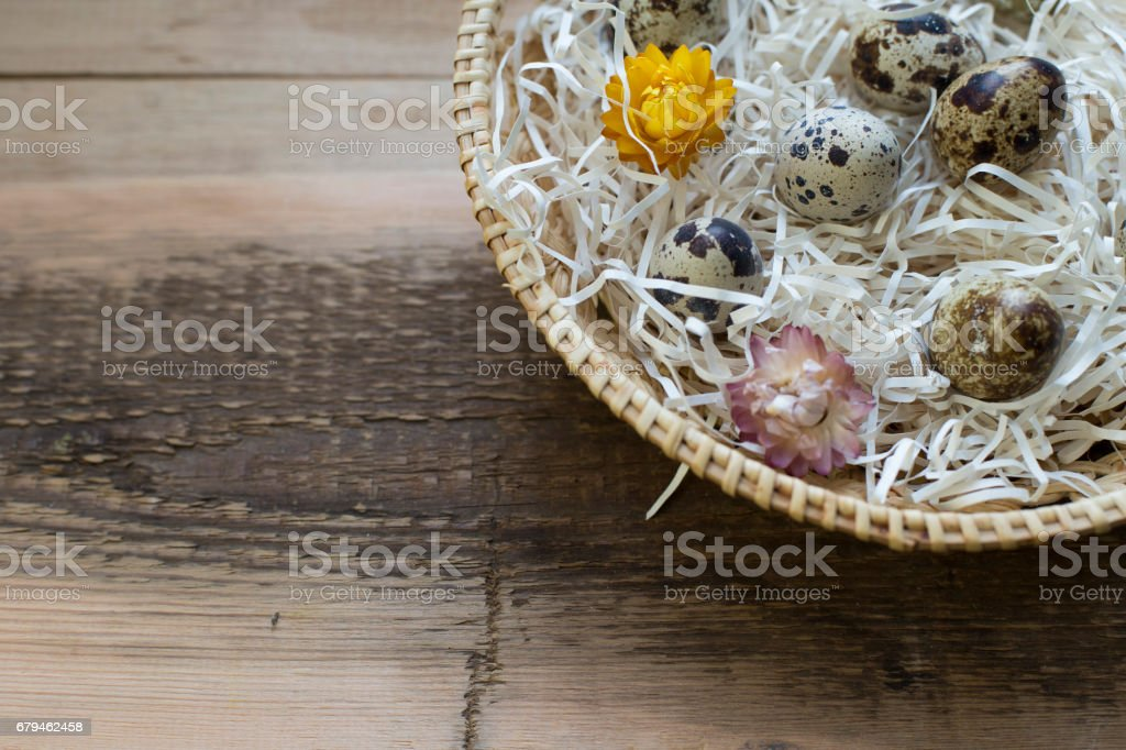 Quail eggs in concept nest royalty-free stock photo