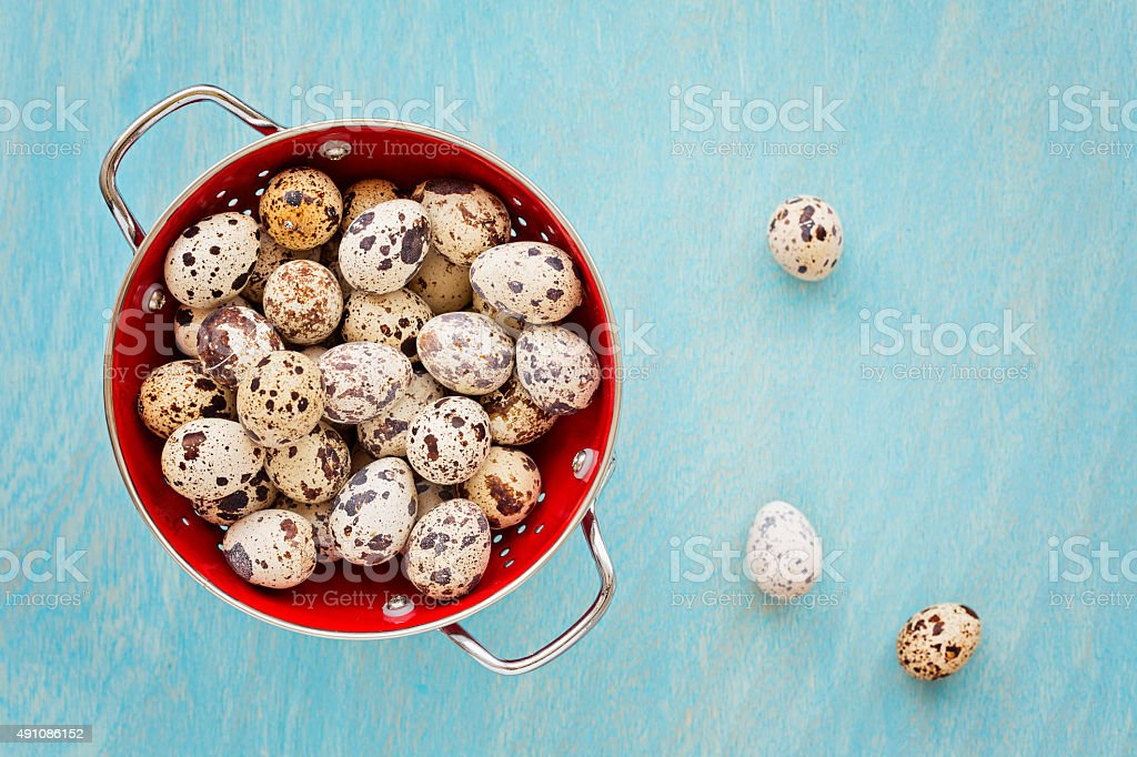 Quail eggs in red collander on a blue wooden background stock photo