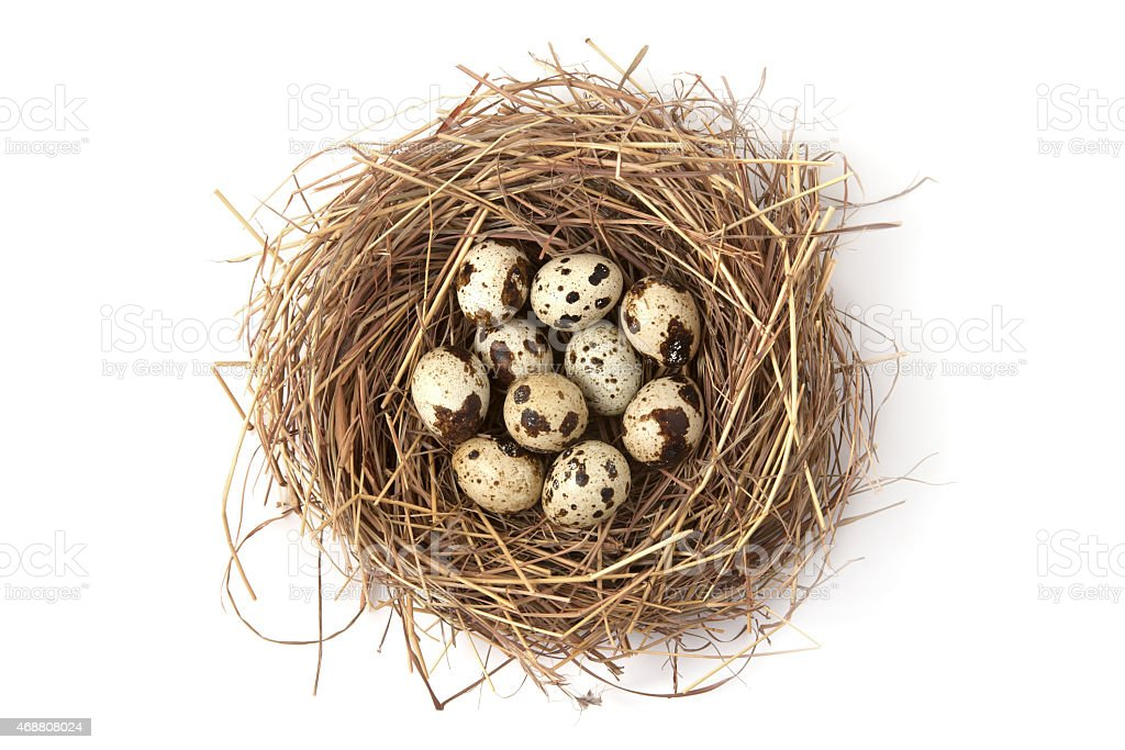 Quail eggs in the nest stock photo