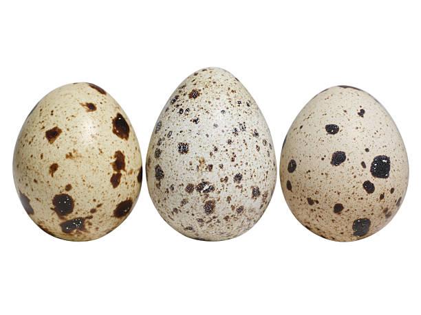 wachtel eggs - wachtelei stock-fotos und bilder