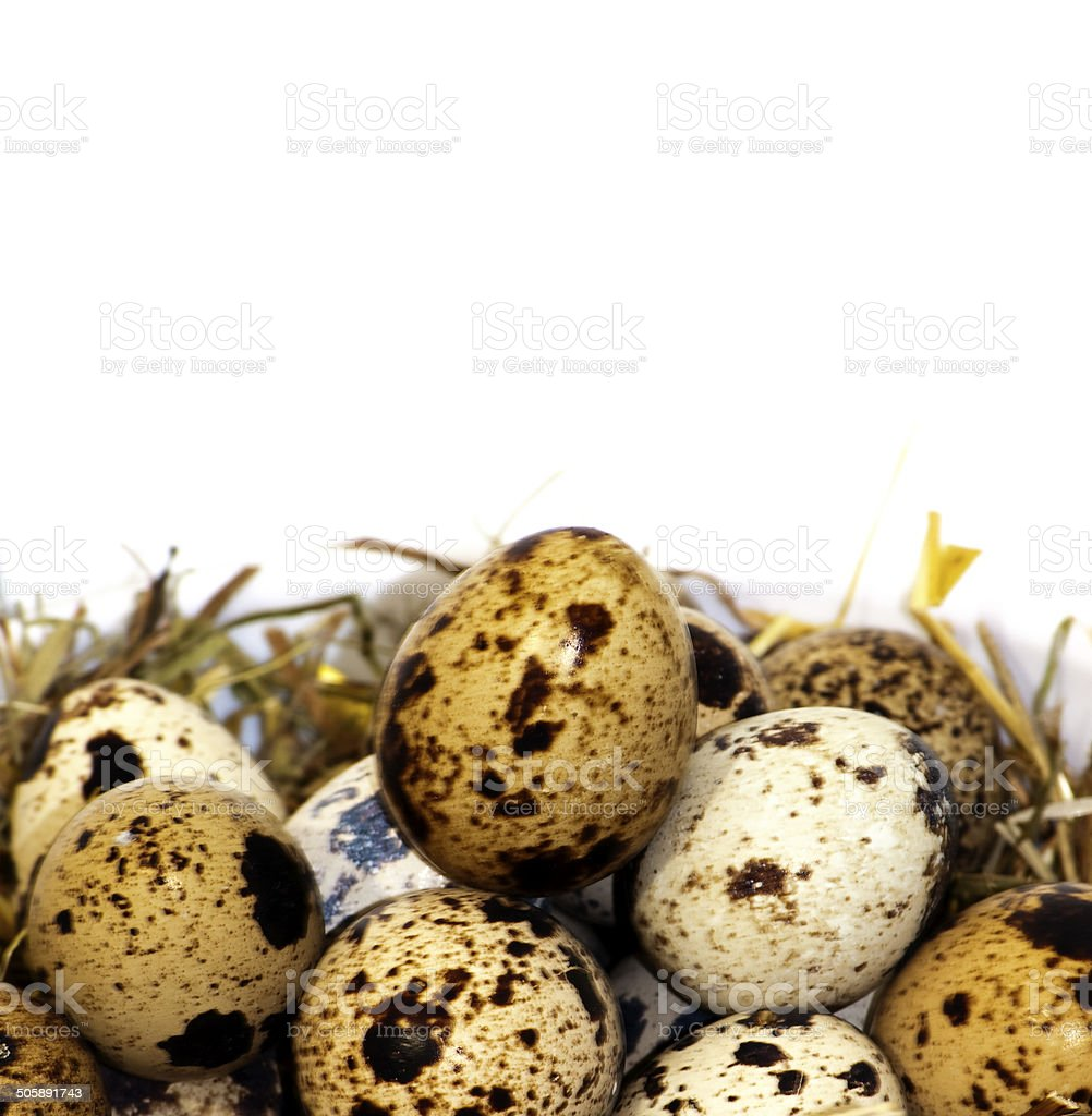 Quail eggs royalty-free stock photo