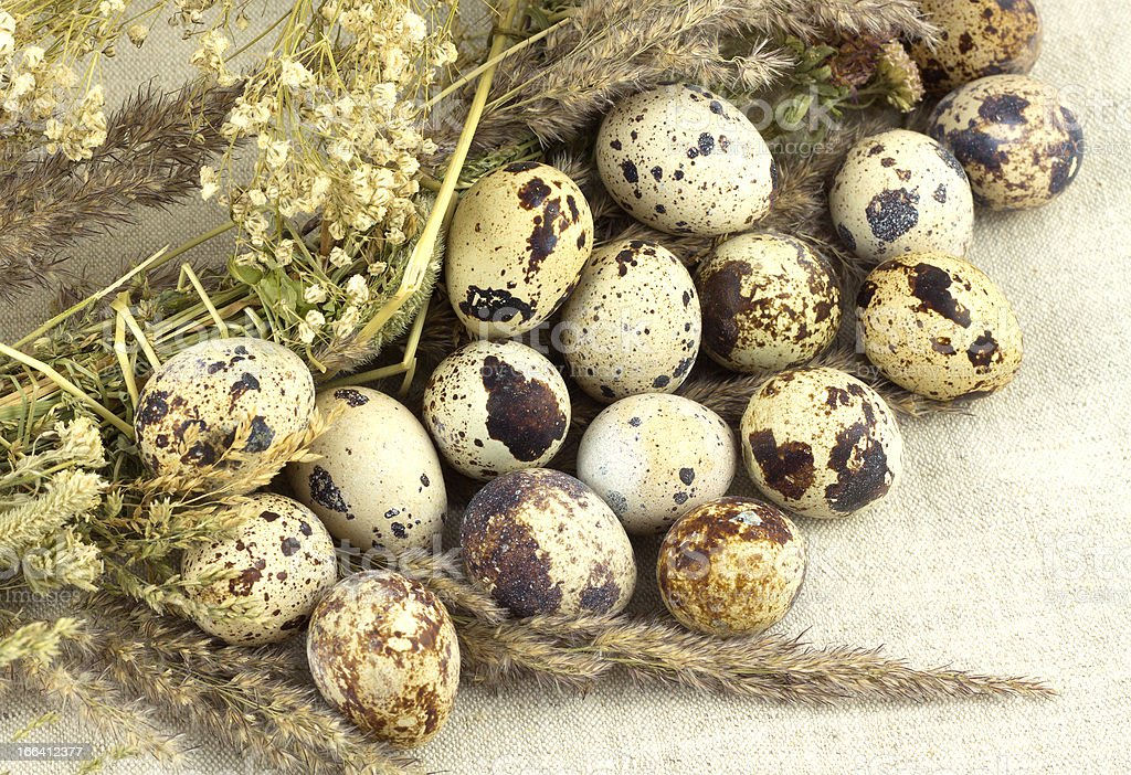 Quail eggs with dry grass royalty-free stock photo