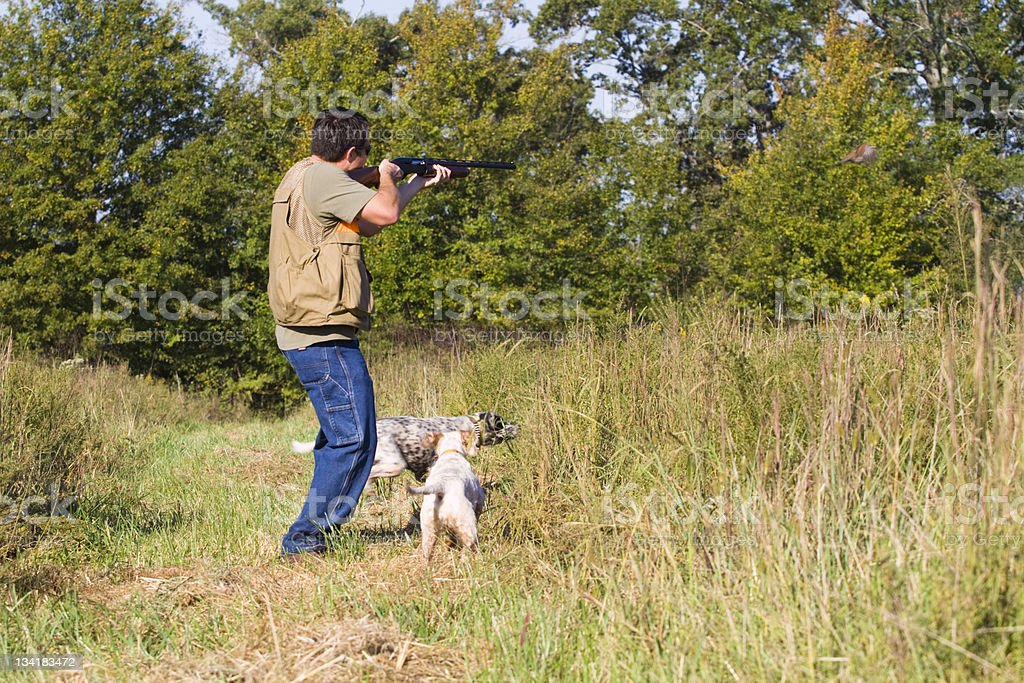 Quail hunter over dogs. royalty-free stock photo