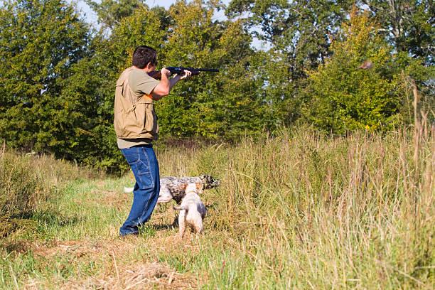 Quail hunter over dogs. stock photo