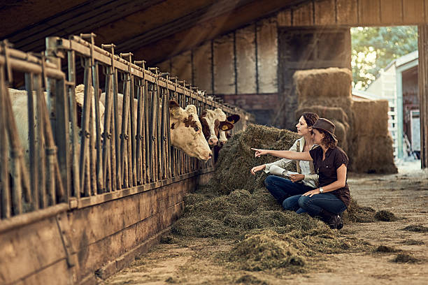 Quality control is everything Shot of two female farmers taking care of their cattle in the barn female animal stock pictures, royalty-free photos & images