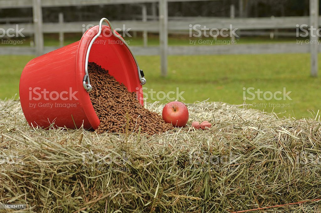 Quality Horse Feed and Treats stock photo