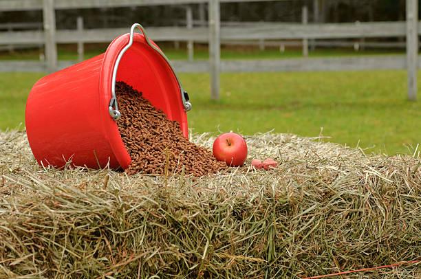 Quality Horse Feed and Treats stock photo