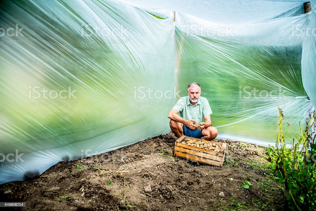 Quarantine field stock photo