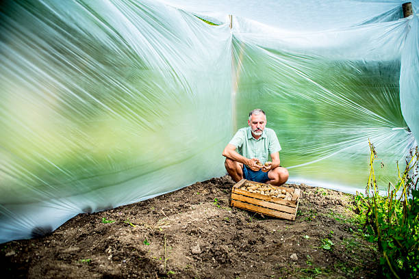 Quarantine field stock photo