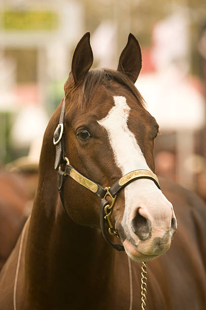 quarter horse head pictures - photo #22