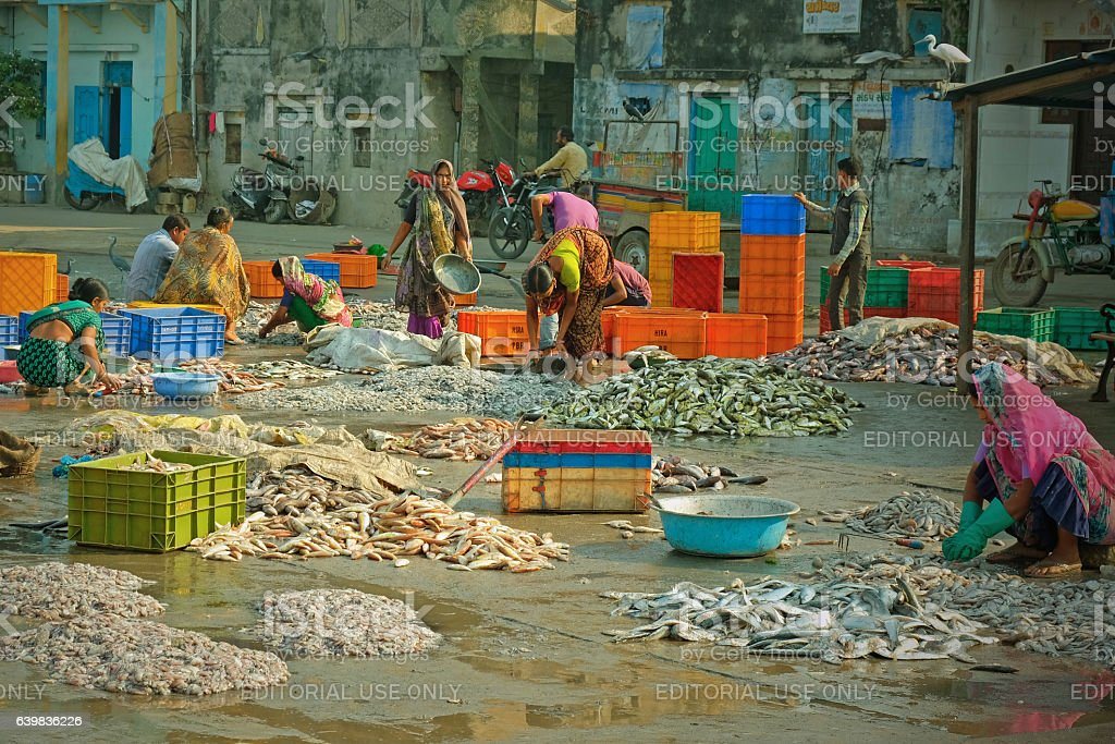 Quayside activity after the catch has been landed stock photo