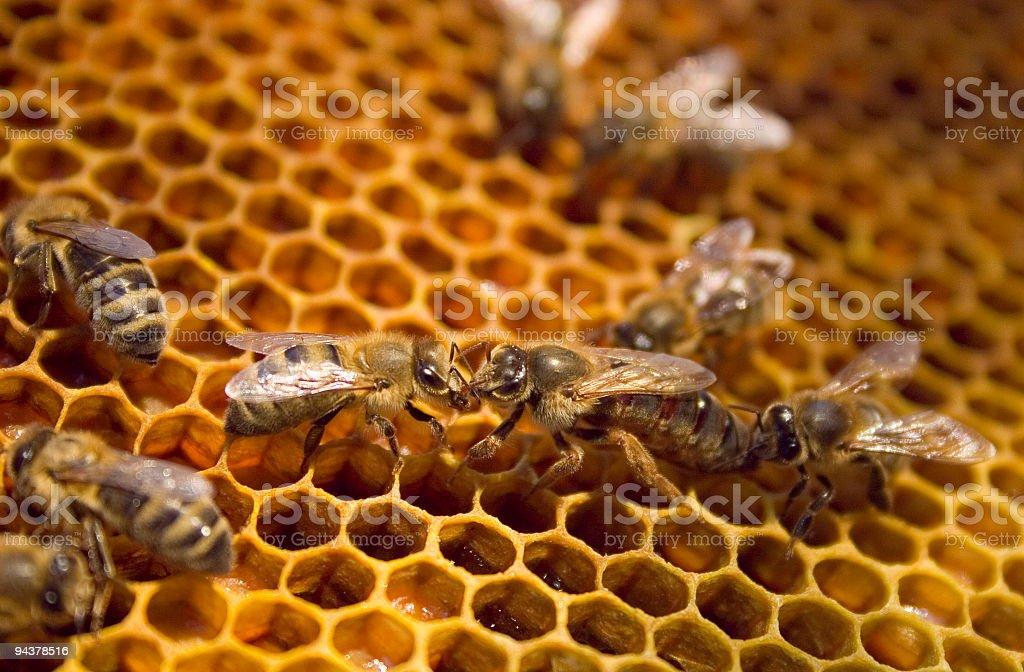 Queen bee royalty-free stock photo