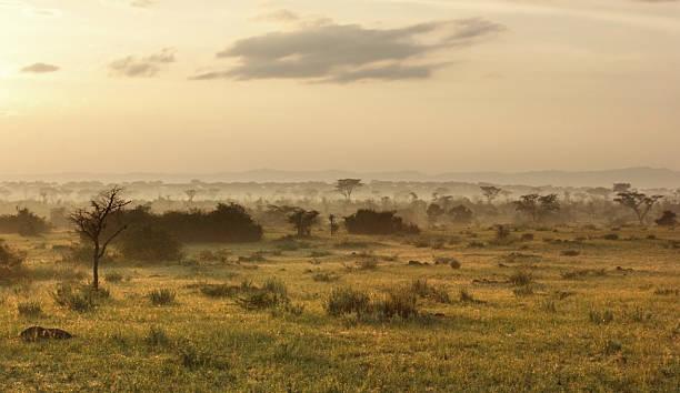 queen elizabeth national park am abend - afrikanische steppe dürre stock-fotos und bilder