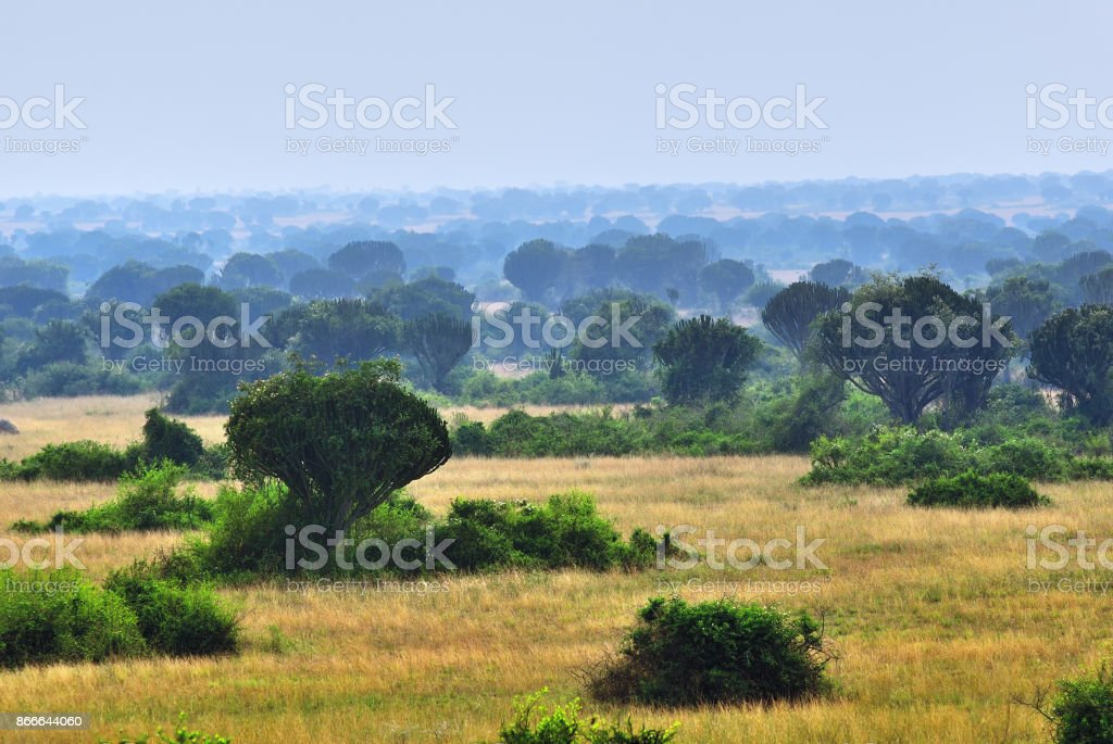 Queen Elizabeth park, Uganda stock photo