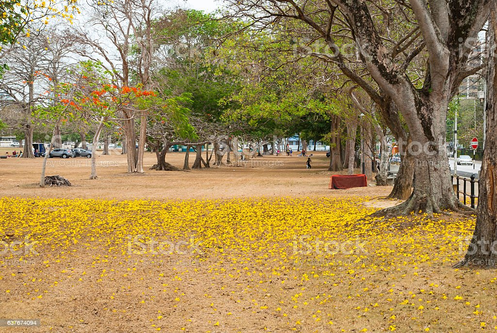 Queen`s Park Savannah, Port of Spain, Trinidad stock photo