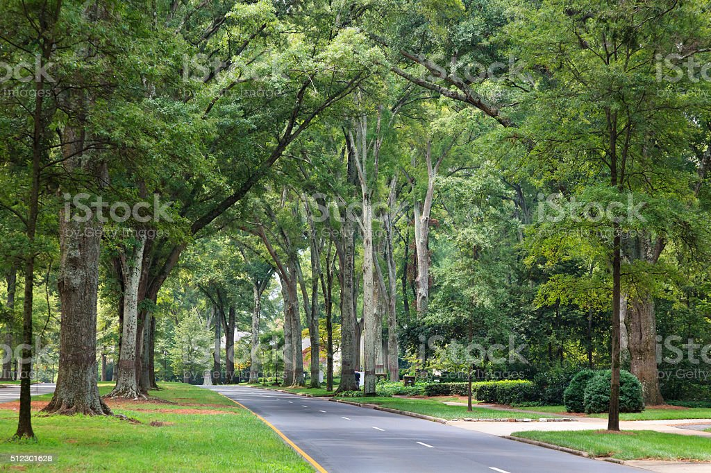 Queens Road West in Charlotte, North Carolina Pretty oak tree lined street in Myers Park area Beautiful People Stock Photo