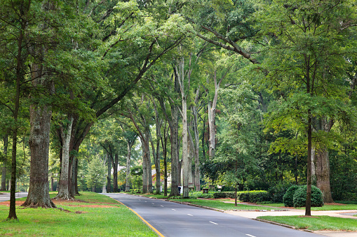 Queens Road West In Charlotte North Carolina Stock Photo - Download Image Now