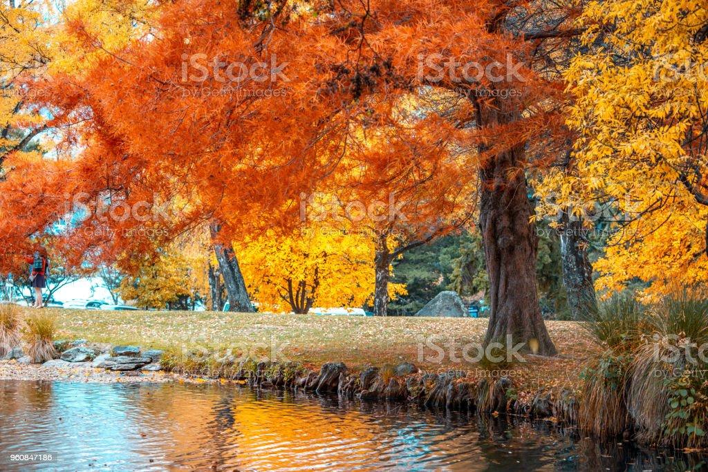 Queenstown Herbstfarbe – Foto