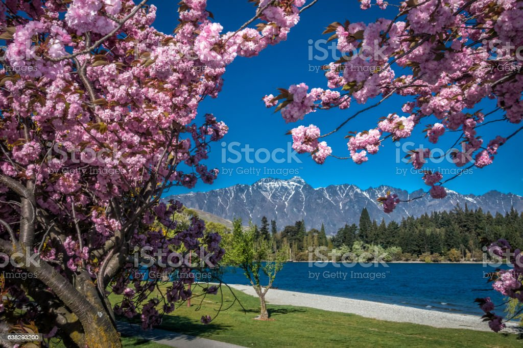 Queenstown blossoms stock photo