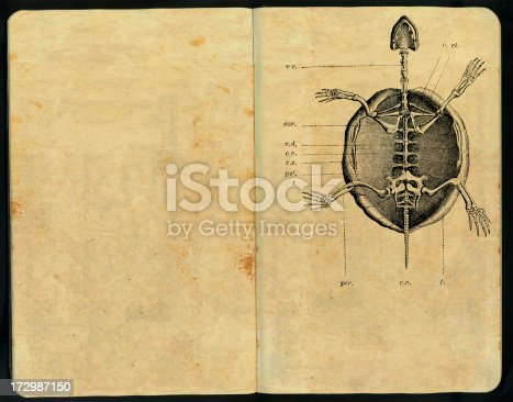 939399010 istock photo Quelonius skeleton Sketch Pad 172987150