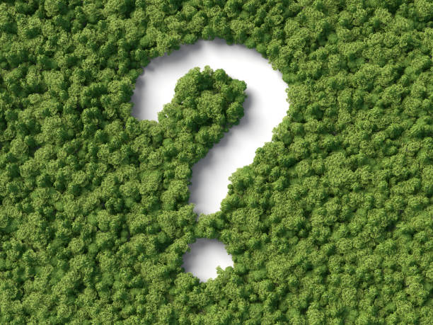 question in the forest stock photo