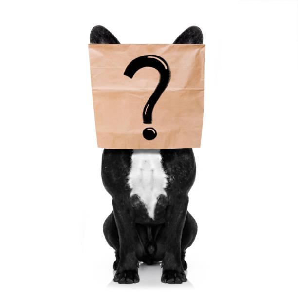 Question mark dog picture id876916558?b=1&k=6&m=876916558&s=612x612&w=0&h=n9jytxtgz38pjjl7xfuzka4on7pasdk087lyanx3 ee=