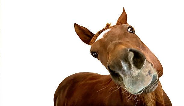questioning horse - lustige pferde stock-fotos und bilder