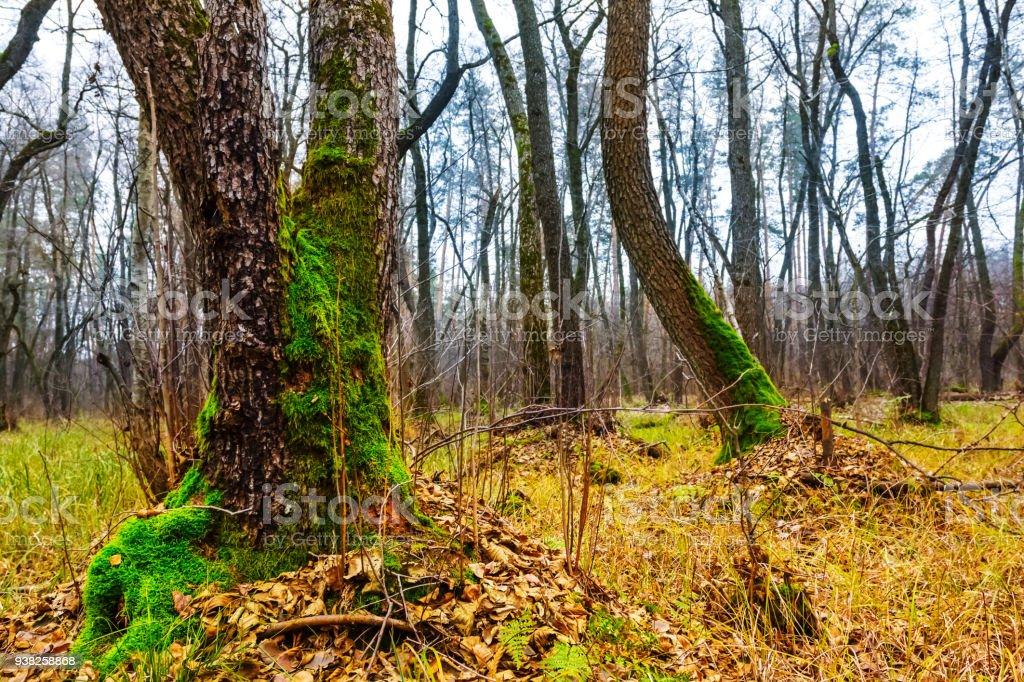 quet autumn forest landscape stock photo