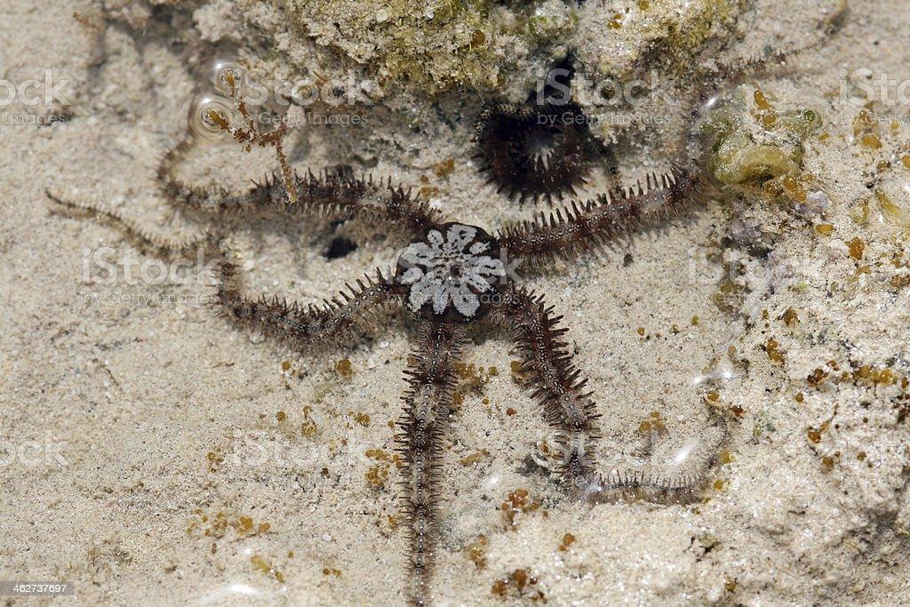 queue starfishes stock photo