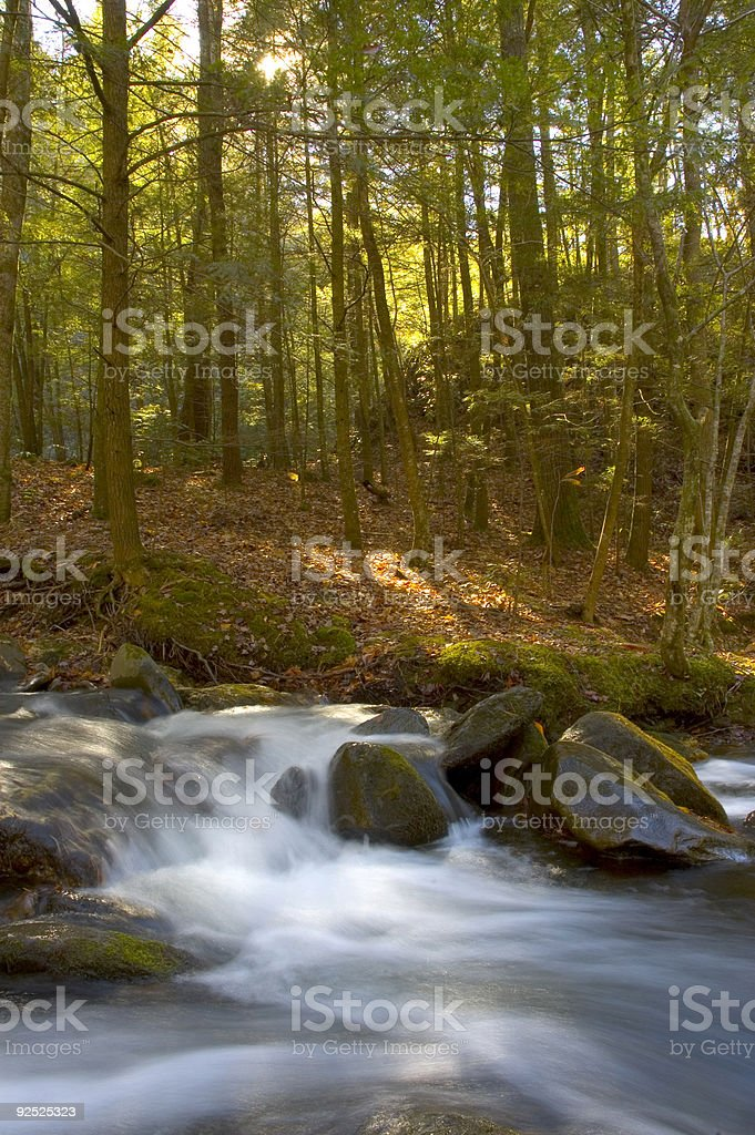 Quick moving stream and forest royalty-free stock photo
